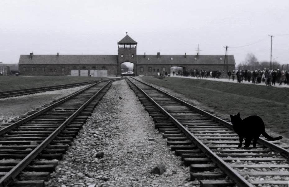 Concentration camp in Auschwitz-Birkenau, Poland, Spotlight Europe